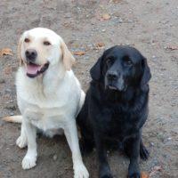 Olly et Djin