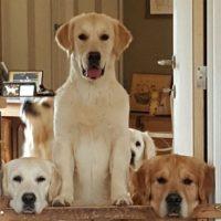 Les chiens de Véronique