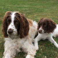 Ginger et Rusty