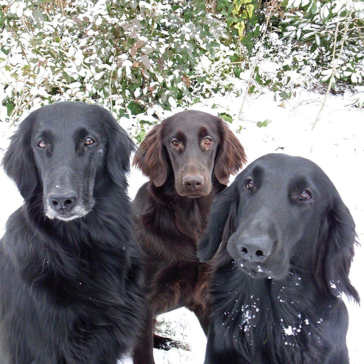 Les chiens de Marie Claire